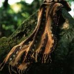 Silk&Wool scarf.20x145cm
