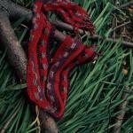 Silk&Wool Red